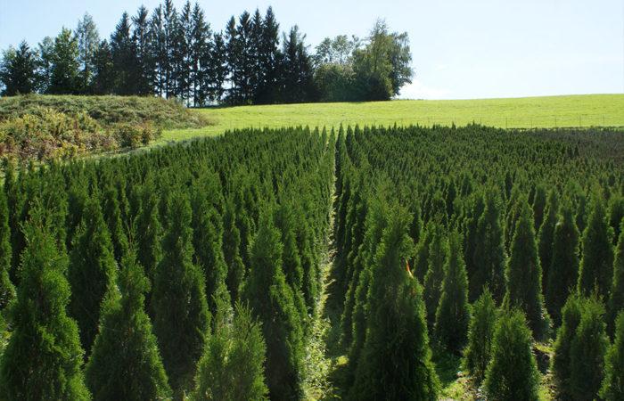 Sortiment - Danninger Pflanzen